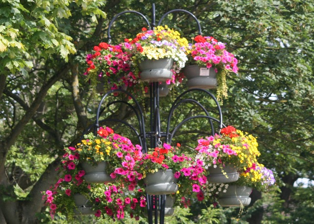 Images of previous years' Guisborough in Bloom displays