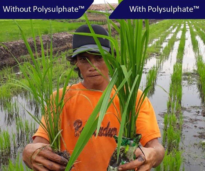Polyhalite trial